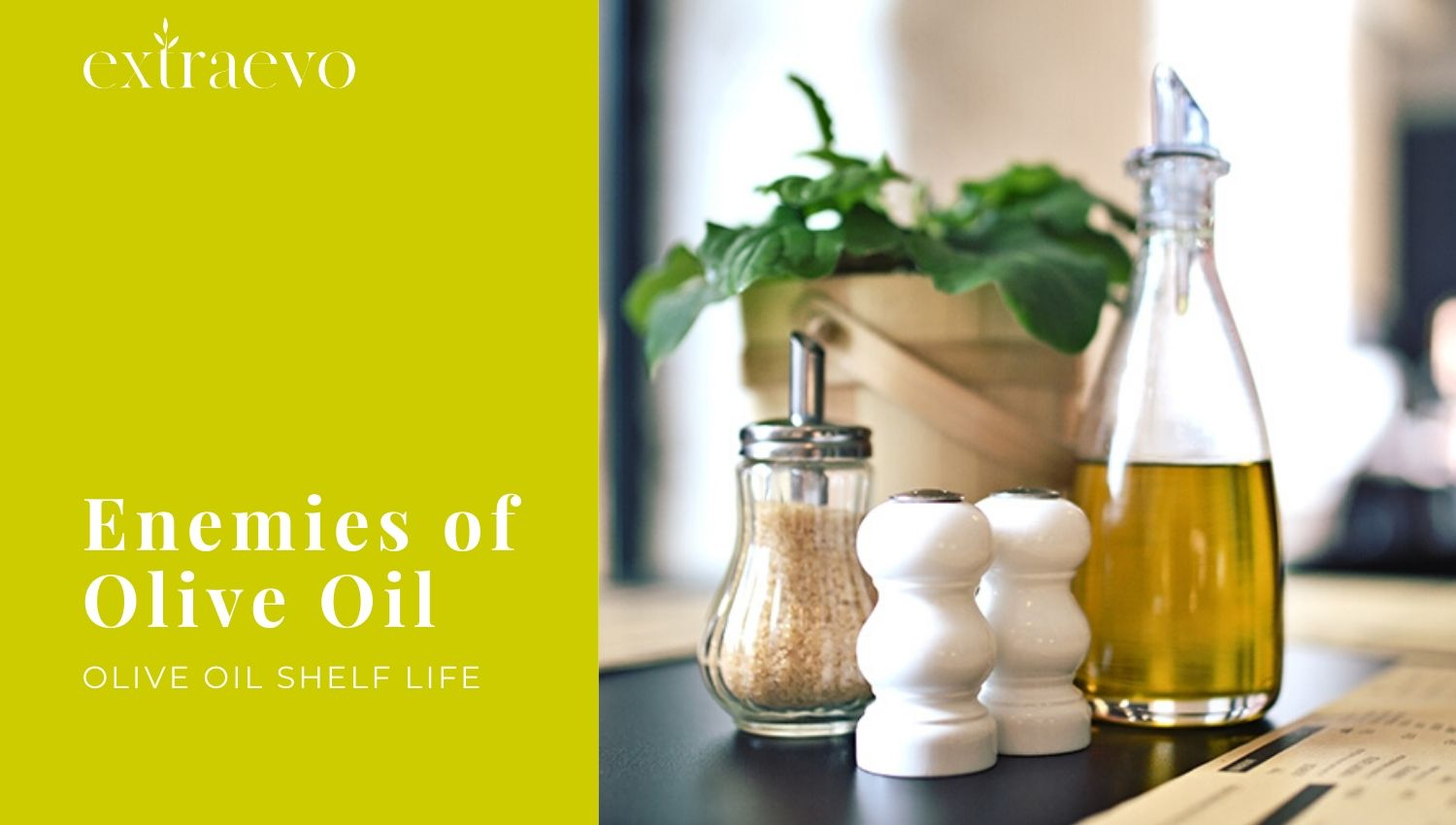 Olive Oil Shelf life: How to store it